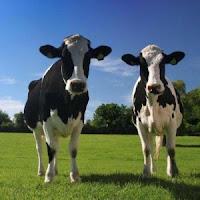 2 vaci