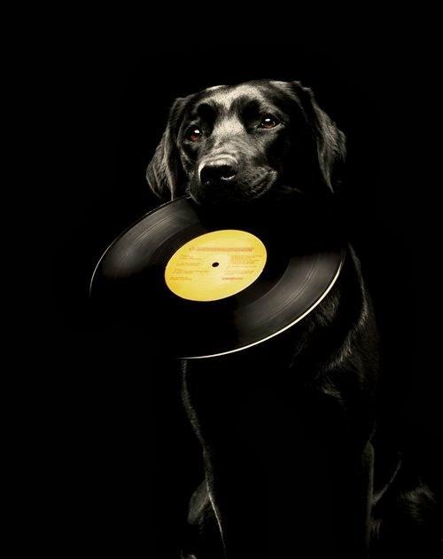 vinyldog