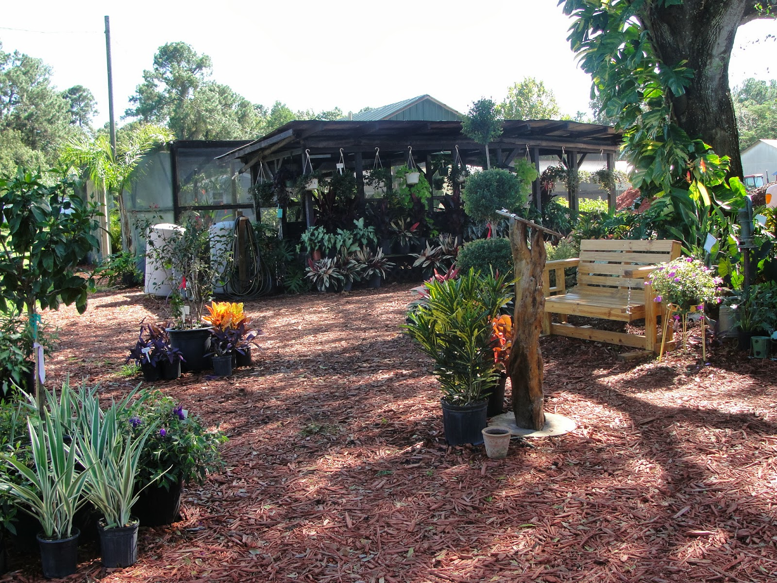 Central Florida Gardener Struthers Nursery Garden Center