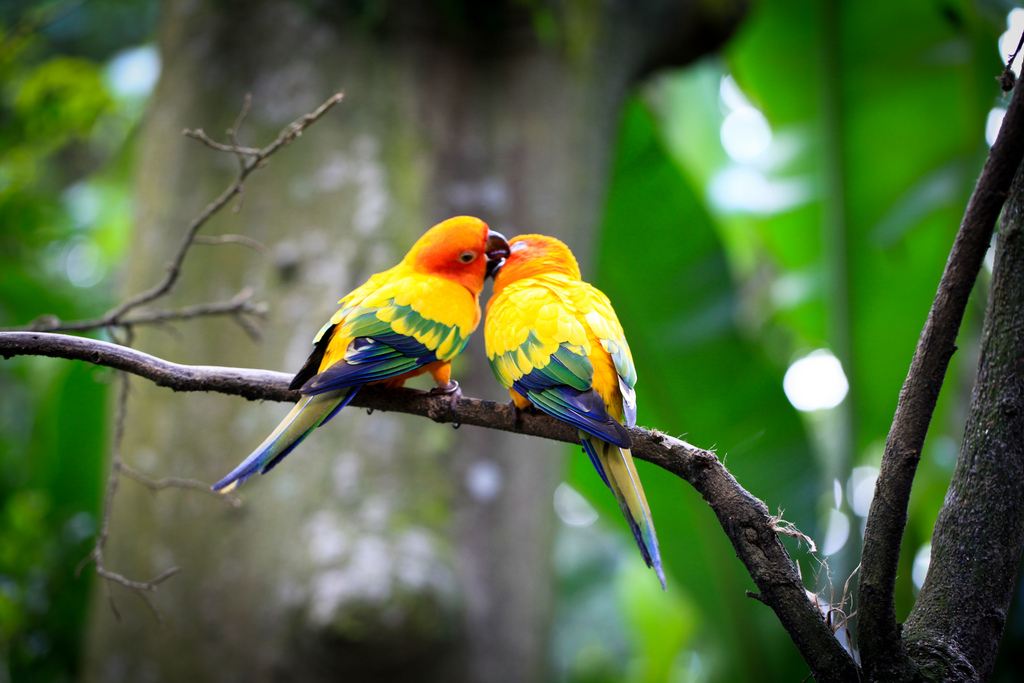 Love Birds couple Wallpaper : Love Poems and Love Quotes: Love Birds
