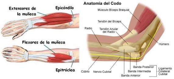 XanaNatura: Dolor de codo. Epicondilitis (Epicondilitis lateral ...