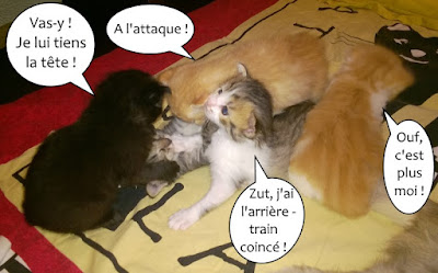 Chatons joueurs !