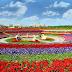 The Dubai Miracle Garden, taman bunga raksasa di padang pasir !