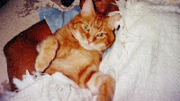 "TPO's cat, ""Biffy"""