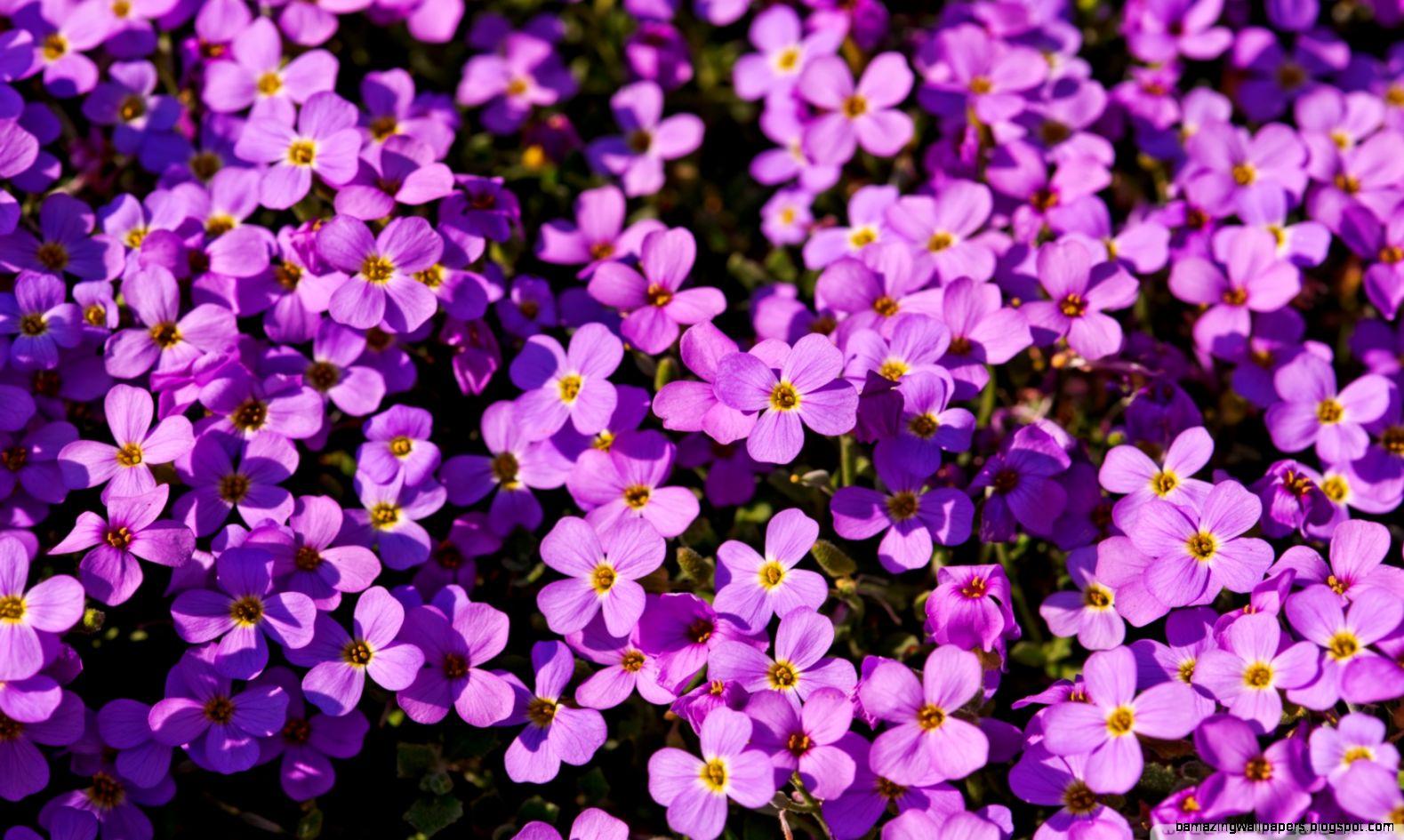 Purple Flowers Wallpapers Amazing Wallpapers