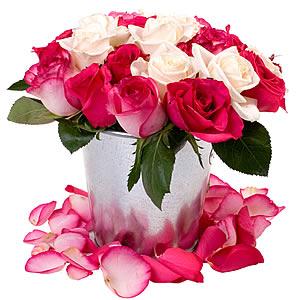 regar rosas