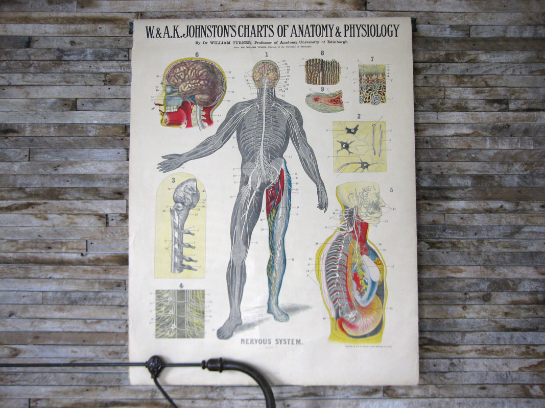 Set of Eight Anatomy Charts : SOLD! | Jersey Ice Cream Co. | Design