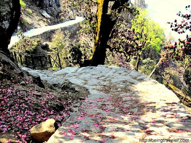 Chopta - Tungnath - Chandrashila track