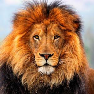 Longwood Lion