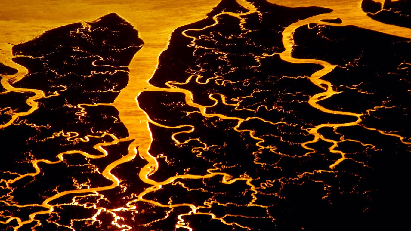 Suwannee River delta, Florida (© Frans Lanting/Corbis) 214