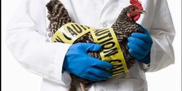 Varian Baru Virus Flu Burung Ditemukan di Indonesia