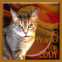 Cody needs purrs and prayers