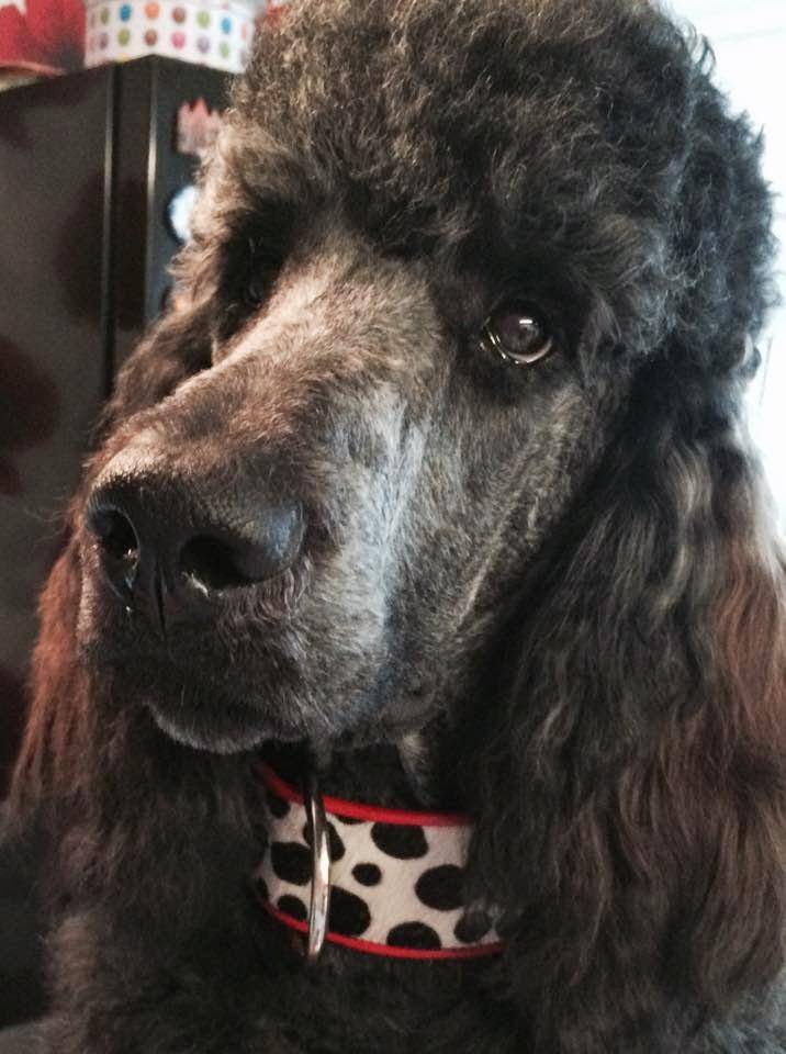 Everyday Dog Collars