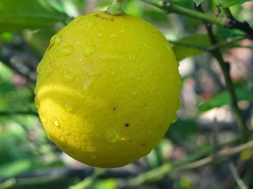 Limón para curar la caspa