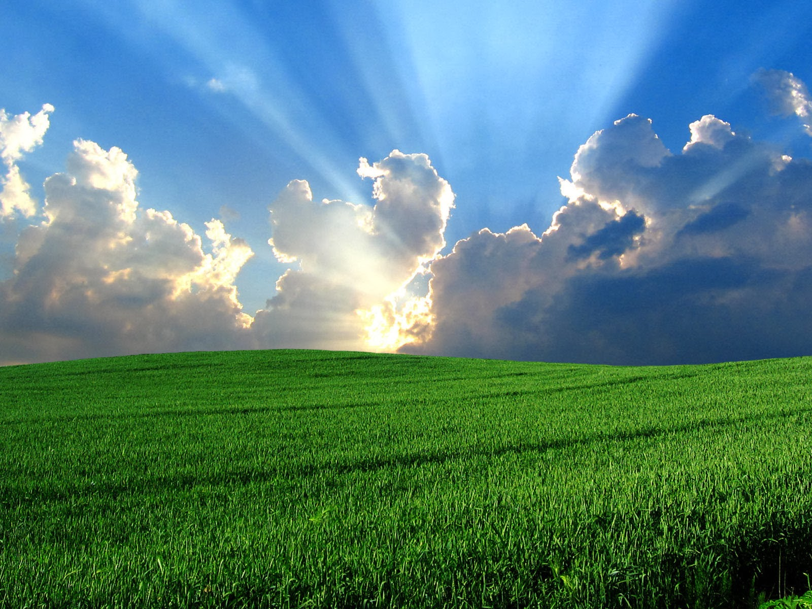 windows vista bliss wallpapers amazing picture collection