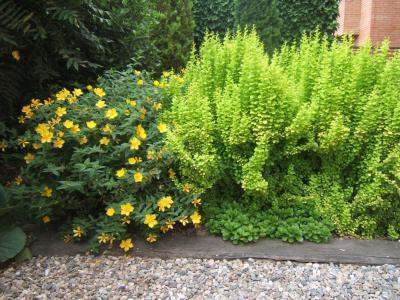 arte y jardiner a arbustos y plantas trepadoras en el jard n