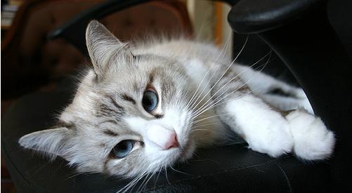 de cat hairy popular