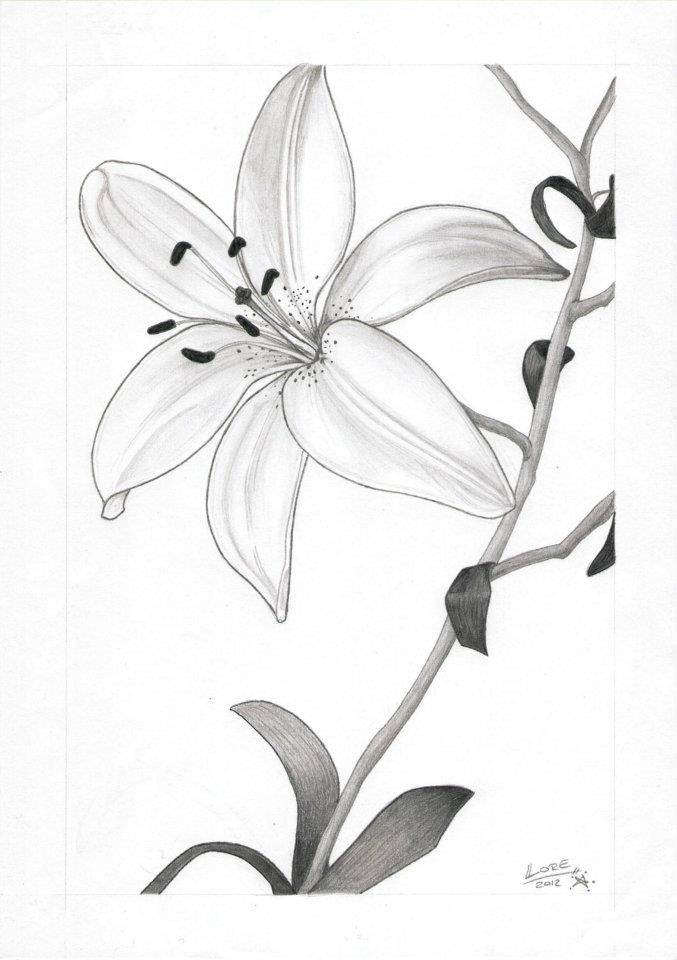 Como dibujar flores a lapiz - Dibujos para colorear - aColorear