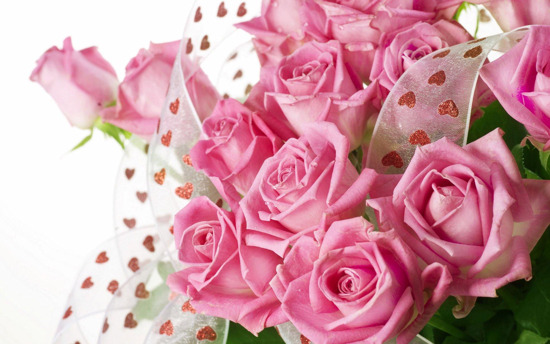 Roses flower Roses photos roses wallpaper for your desktop