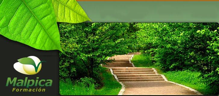 Noviembre 2011 jardiner a y paisajismo paisajismo for Formacion jardineria