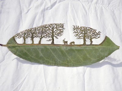 lorenzo duran cut leaves