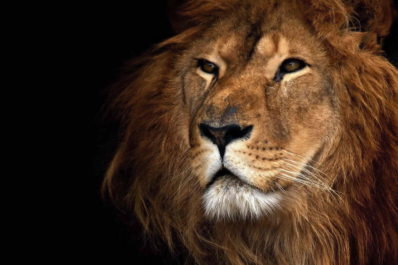 http://3.bp.blogspot.com/-iXtG5oGN6XU/TeF2YDYGAfI/AAAAAAAAB0s/Hb6YtDXoebs/s1600/lion.jpg