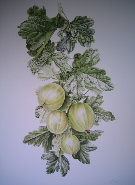 Gooseberry Botanical Art)