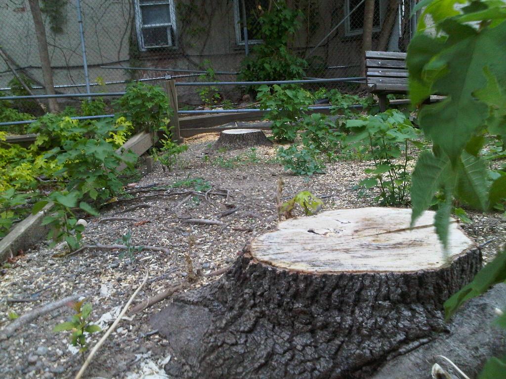 http://3.bp.blogspot.com/-iYPUwvj0QEY/T_7UxDN57YI/AAAAAAAAALE/26mF-9UlI80/s1600/treestump-befordpark.jpg
