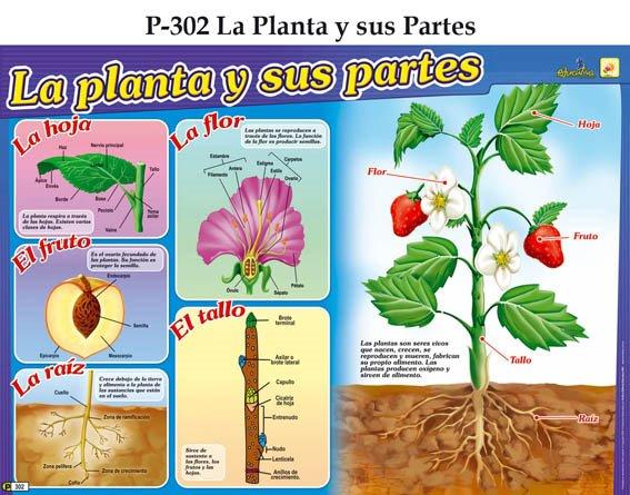 Más de 1000 imágenes sobre jardín en Pinterest | Comprensión