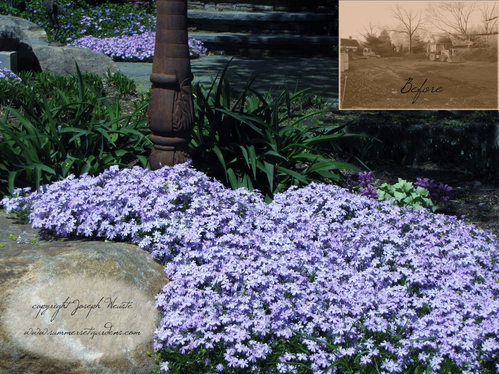 Garden design creeping phlox in the garden for Landscape decor