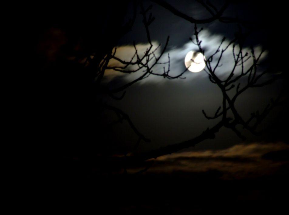 Dark Forest Night Moon Wallpaper Size 1024x768