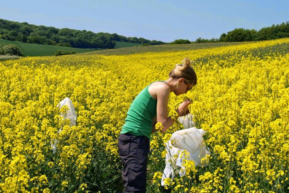 Bahaya Penggunaan Pestisida Pada Lebah Madu Bagi Lingkungan