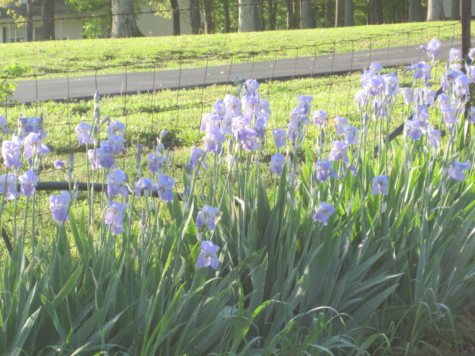 Precious & Celestial Wonders Organic Farm Inc Tennessee State Flower