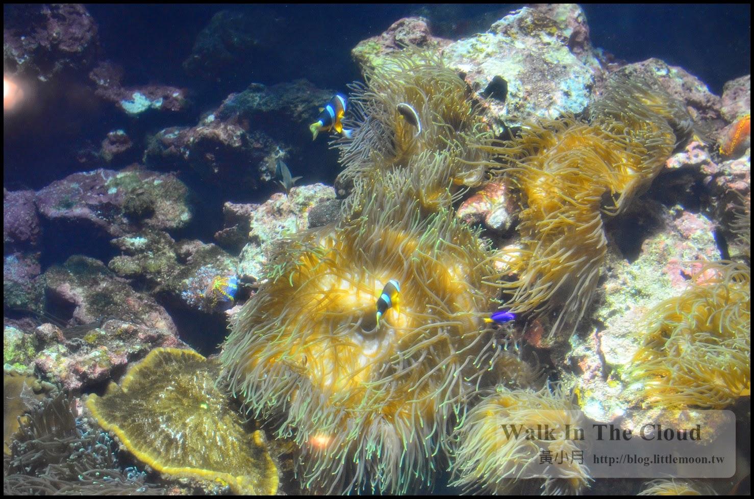 金光閃閃的珊瑚與小丑魚尼莫