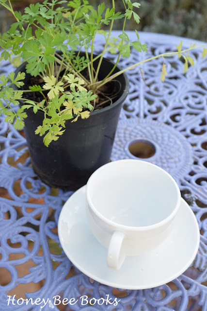 planting parsley in a teacup