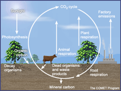 Carbon cycle steps