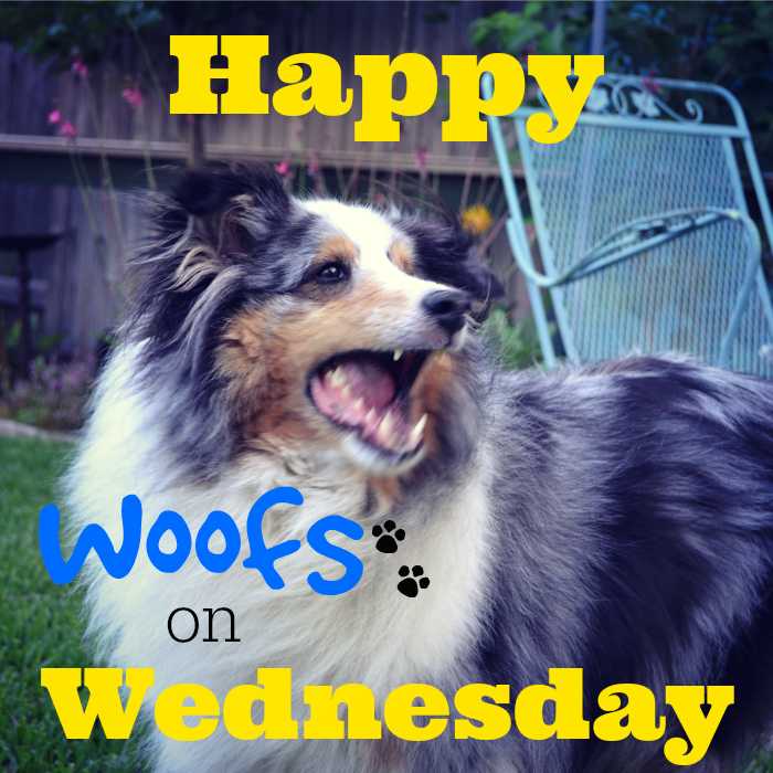 Happy Wednesday Dog Happy Woofs on Wednesday