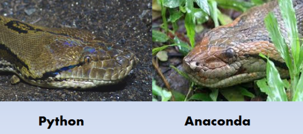reticulated python vs green anaconda