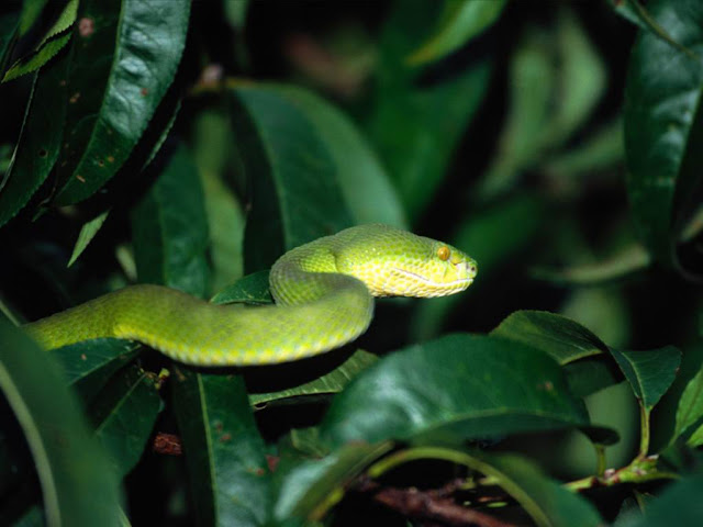 Deadly Beauty-Snake1
