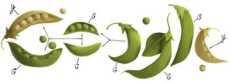 Gregor Mendel logo de Google (doodle)