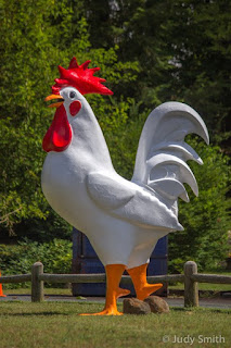Rodney the Rooster