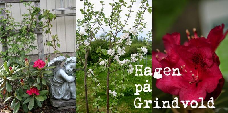 Hagen på Grindvold
