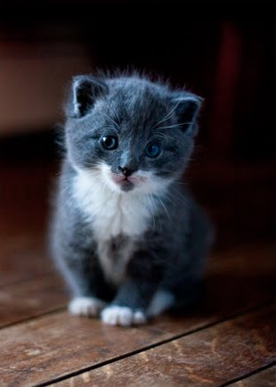 Smokey as a wee kitten