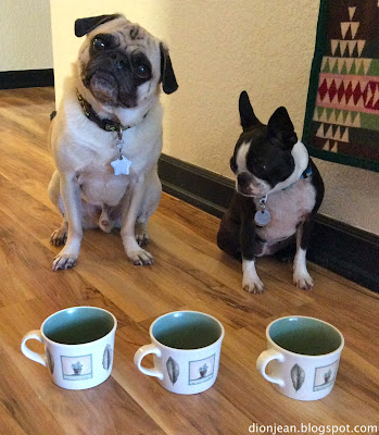 Pug and Boston terrier waiting for a memory test to start