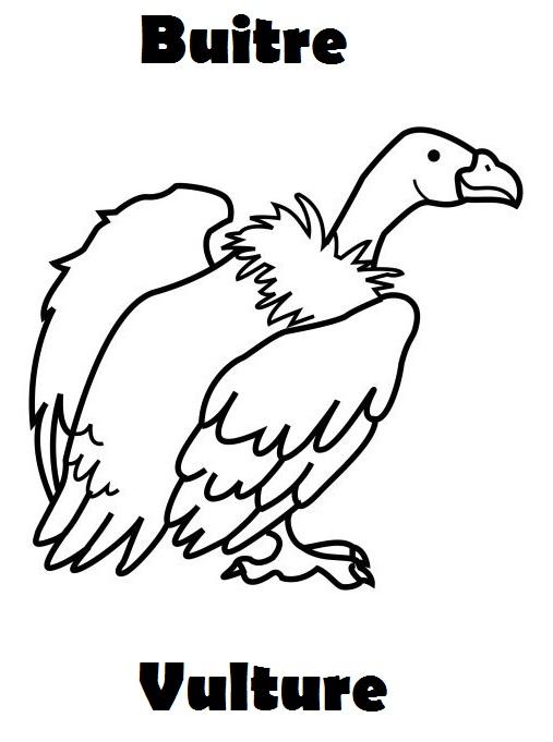 aprender inglés: 20 Láminas para Colorear en Inglés: animales