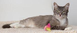 Adopt a nice kitty....