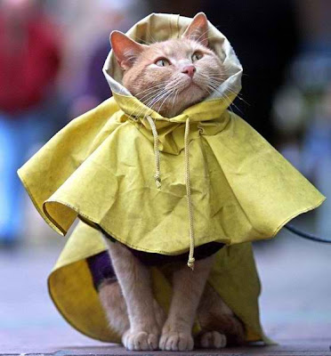 cat weather reporter in a raincoat