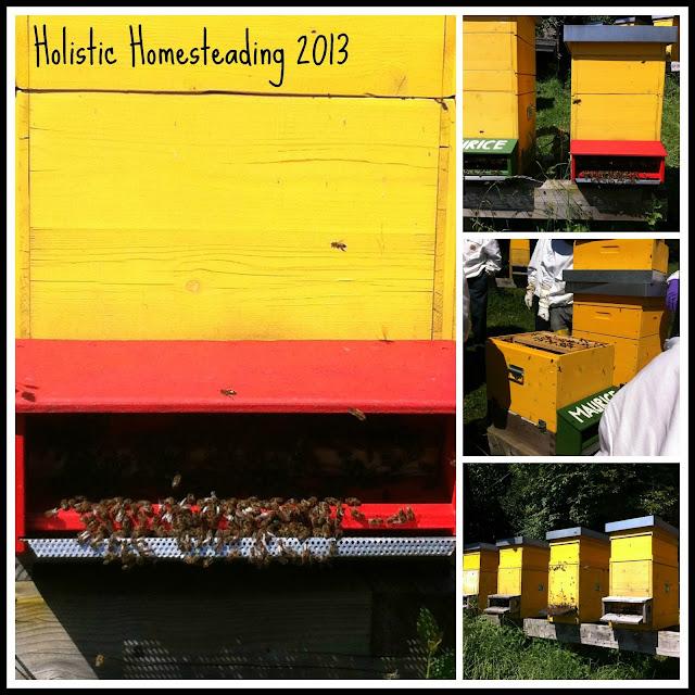 beekeeping summer treatments