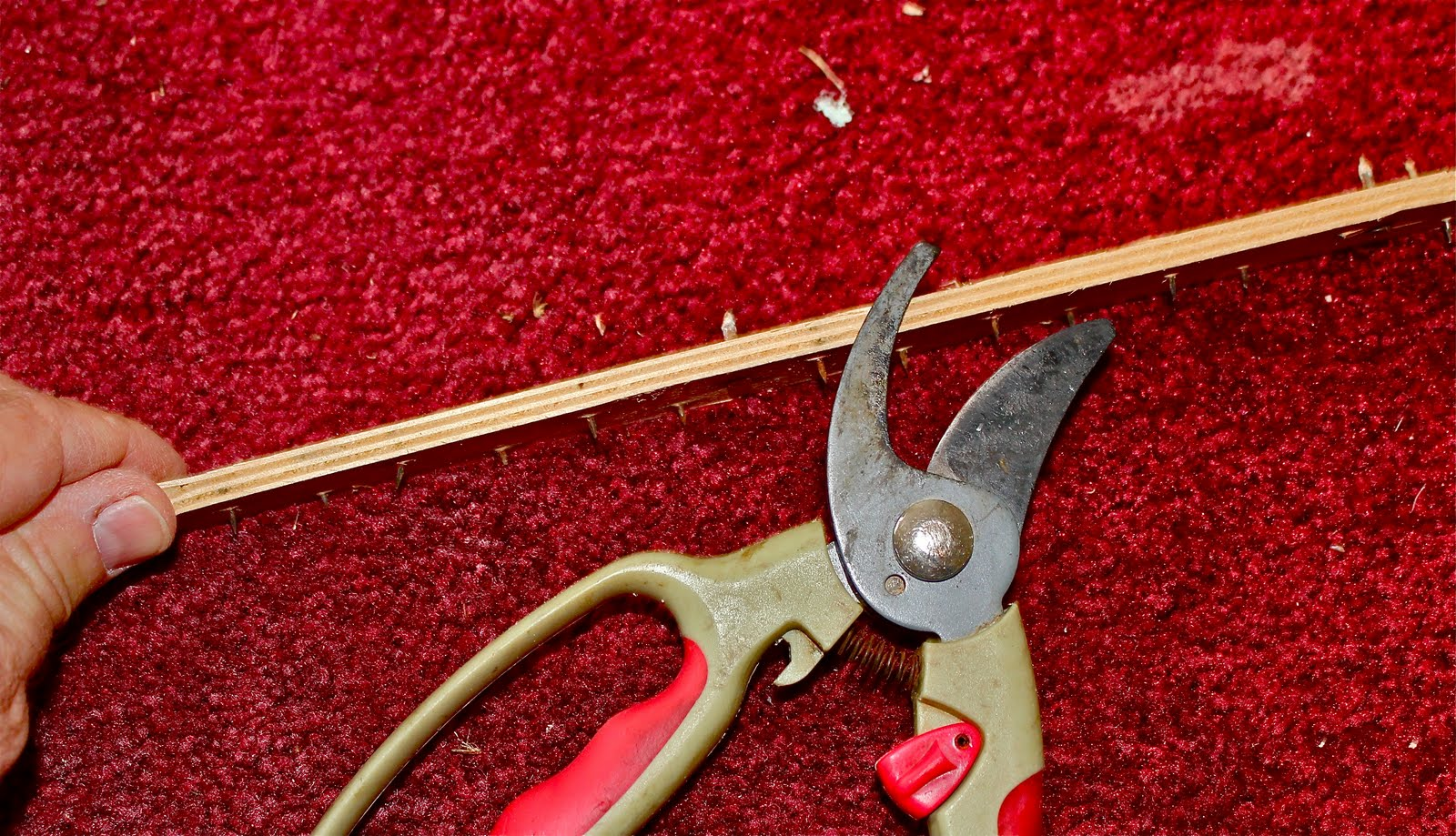 Tack Strip Nails Poking Through Carpet Vidalondon