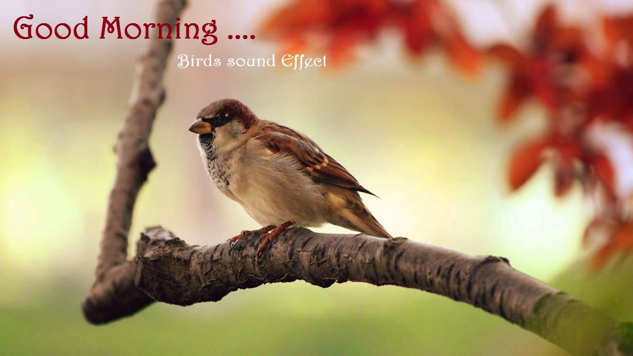 new good morning happynes bird sound effects Wishes photos wallpaper hd free download